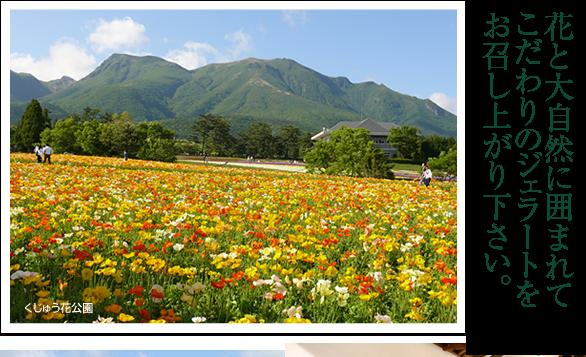 花と大自然に囲まれてこだわりのジェラートをお召し上がりください